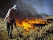 آتش زدن مزارع، مصداق تهدید بهداشت عمومی است